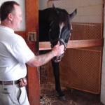 Stallion Arch