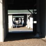 Looking through barns
