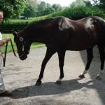 Fan faviorite stallion Pulpit