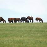 Horses & Mares