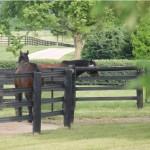 Darley stallions