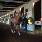 California Chrome cruising the shed row