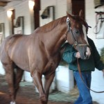 California Chrome heads to his stall to take a nap