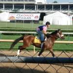 Kentucky Derby contender_Optimizer