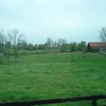 Bluegrass Countryside