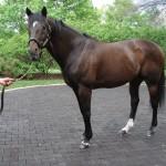 Fusaichi Pegasus winner 2000 Kentucky Derby