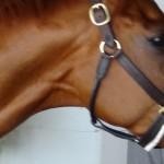 Derby winner Animal Kingdom walking shed row