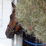 Happy back in his stall, a little food & nap