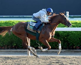 California Chrome - Photo by Chelsea Durand