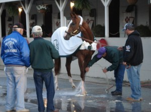 Trainer Art Sherman watched California Chrome the morning after his Kentucky Derby win