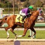 California Chrome wining the 2014 San Felipe Stakes - Photo by Benoit