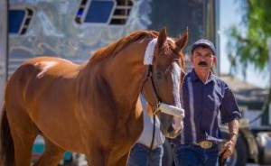 California Chrome arrives at Santa Anita Park. Photo by Zoe Metz