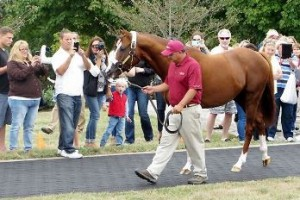 California Chrome at Taylor Made